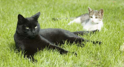 cats-grass-outdoor