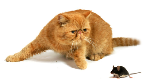 ginger cat and mouse