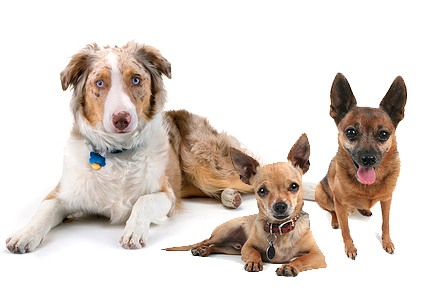The Ideal Bodyweight Range For Dogs Animal Hospital Perth