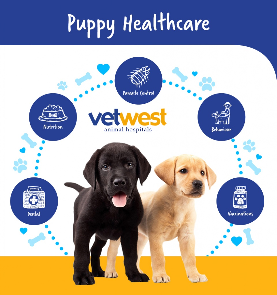 Puppy Healthcare Infographic Jpg Vetwest Animal Hospitals