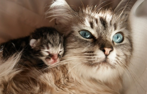 newborn kitten with mother
