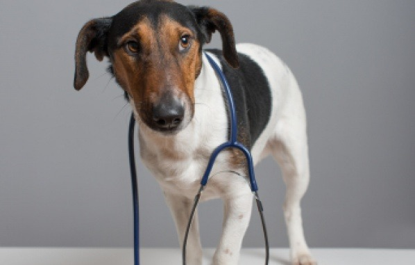 10 common illnesses we see in pets, when to visit the vet