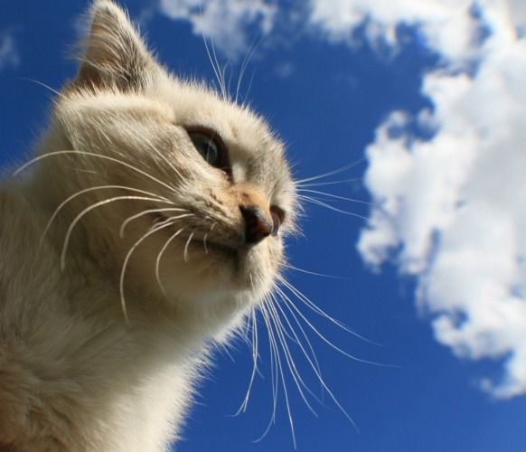 Why Do Cats Have Whiskers Communication Touch Sensors Anatomy