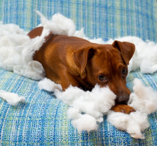 Puppy-Care-Indoot-Hazards-To-Avoid