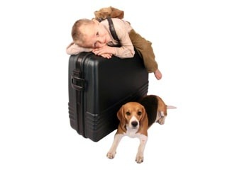 Travelling by air with your pet | Vetwest Animal Hospitals