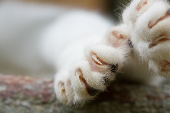 Trimming your cat\'s claws - indoor outdoor cats, older cats ...