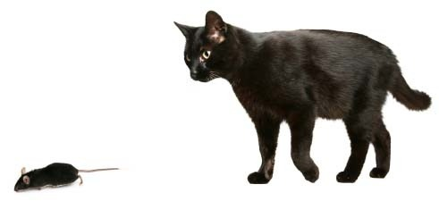 Image result for black cat & mouse