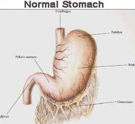 what happens when the stomach is distended with air?