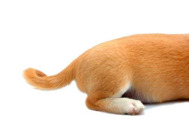 Dogs Tail S Wagging