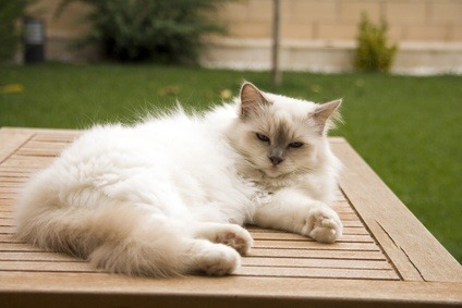 Cats and high temperature