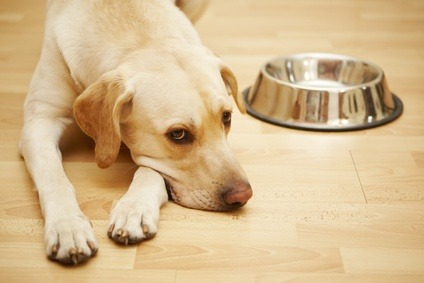 Allergies to certain food can irritate cats and dogs