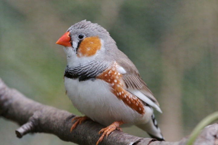 What causes stress in birds | recognising stress | Vetwest
