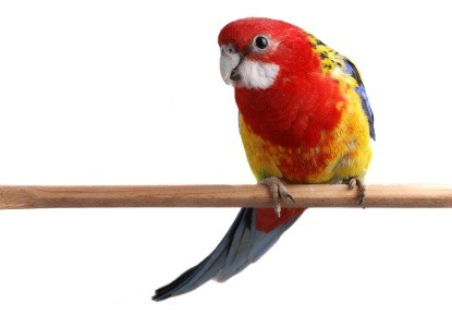 What causes stress in birds | recognising stress | Vetwest Animal