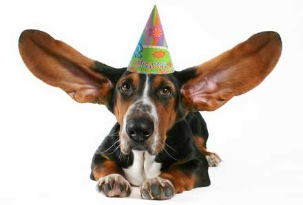 Fireworks - and coping with loud noises | Vetwest Animal Hospitals