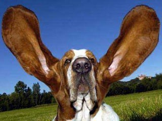 Ear Infections and Treatment in Dogs - Signs Symptoms