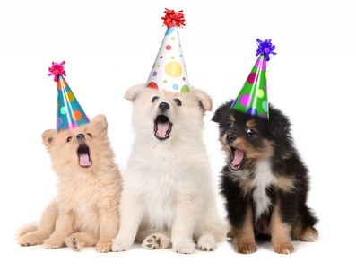 Birthday Parties Are Not The Perfect Time For Meeting New Friends We Suggest Choosing A Guest List Of Dogs Your Pet Is Well Acquainted With And Who You