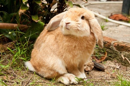 Feed Formulation Method for Rabbits