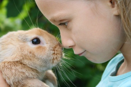 rabbit, bunny, diseases, prevention, treatment