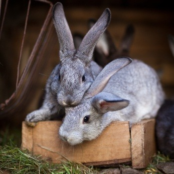 Diseases of rabbits - symptoms and treatment