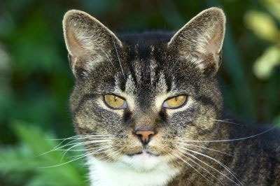 Ageing   How Long Do Cats Live? | Vetwest Animal Hospitals