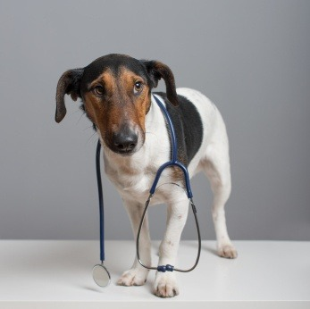 10 common illnesses we see in pets, when to visit the vet, symptoms