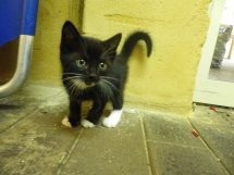 what to do if you find a stray cat or kitten   Vetwest Animal Hospitals