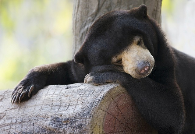 sleeping-bear-photo-courtesy-of-alex-cearns-of-houndstooth-studio