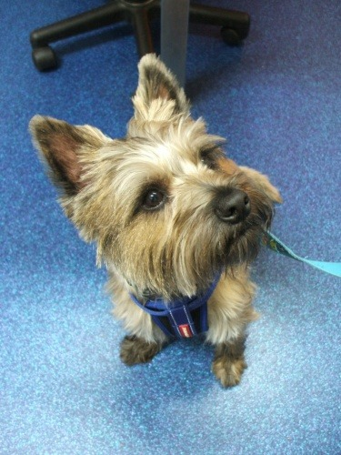 Patient of the Month - Alfie   Vetwest Animal Hospitals