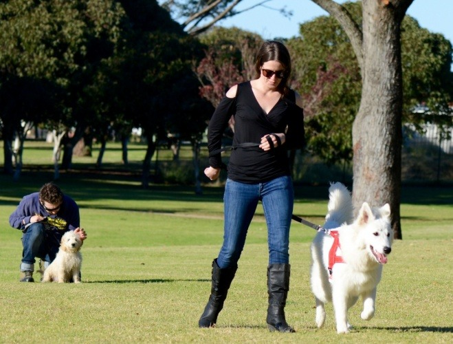pet-owners-training-their-dogs-at-the-park