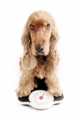 dog-sitting-on-scales-weight-loss-for-dogs