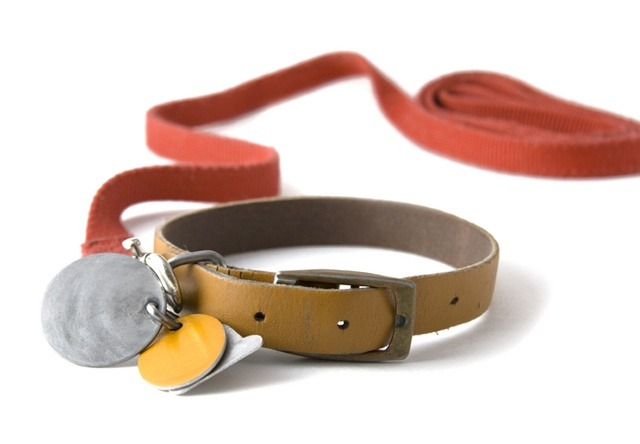 dog-collar-and-tag