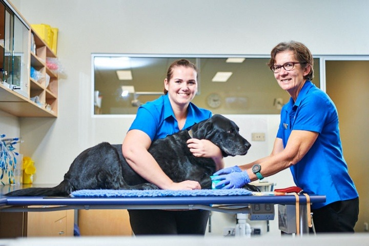 A veterinary career at Vetwest Animal Hospitals