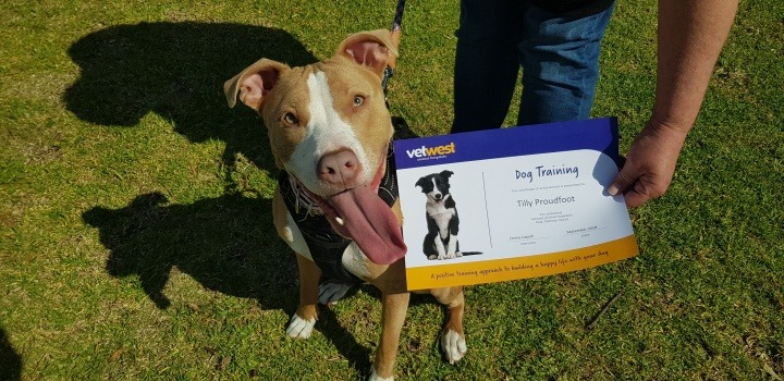 Vetwest Dog Trainers Helping Dogs Like Tilly
