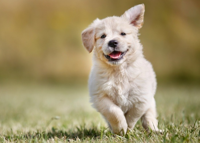 Dog Vaccinations in Perth