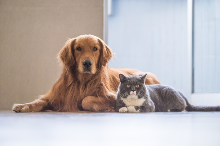 Cat and Dog Vaccination Schedule