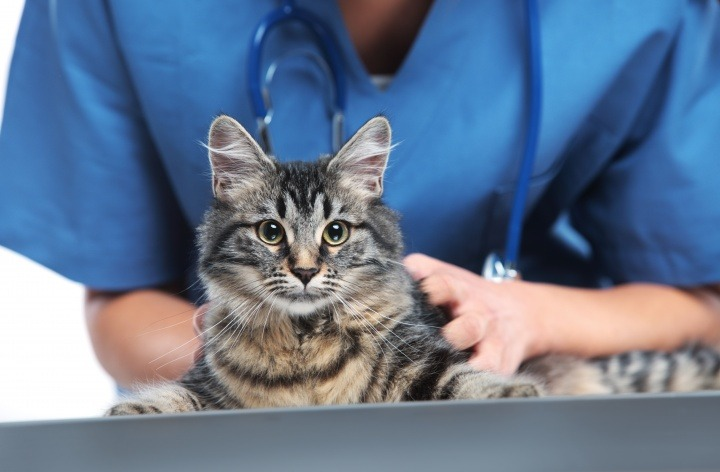 Vetwest Vaccinations