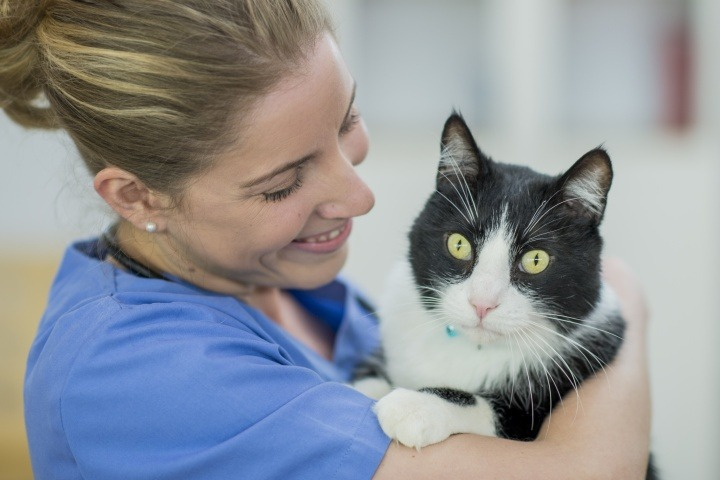 Kitten Vaccinations at Vetwest Animal Hospitals