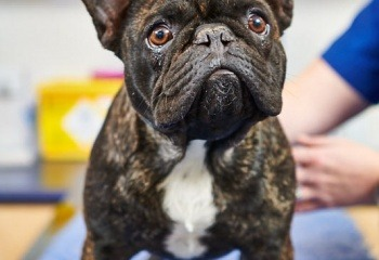 Perth Dog Friendly Parks And Beaches Vetwest Animal Hospitals