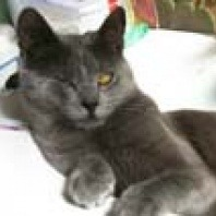 connie-our-little-stray-cat-for-pet-adoption