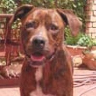 zeus-reunited-with-owner