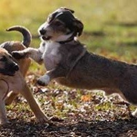 how to break up a dog fight alone