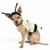 bee dog cropped