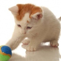 cat playing ball