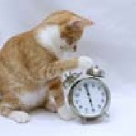 cat with alarm clock