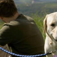 dog owner on hike with labrador
