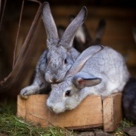two rabbits outside hutch