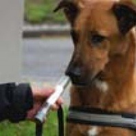 study-shows-dogs-can-detect-lung-cancer-in-humans-by-sniffing-human-breath