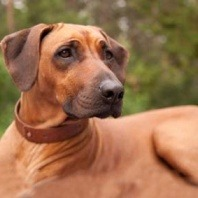 Dogs - Breed profiles | Vetwest Animal Hospitals