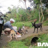 vetwest-supports-bali-animal-welfare-association