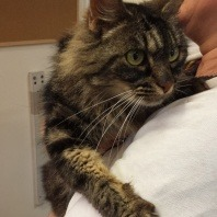 microchip-reunites-stray-cat-with-her-family